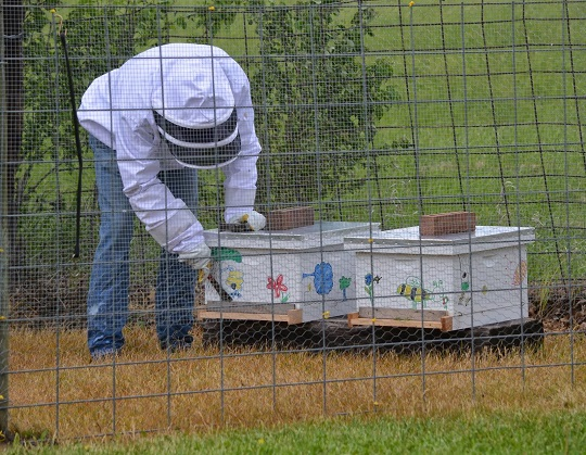 campers learn about bee safety