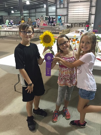 sunflower winner at fair