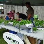 calann herb farm
